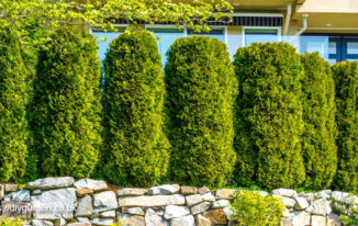 Choosing Trees And Shrubs For Privacy Screens